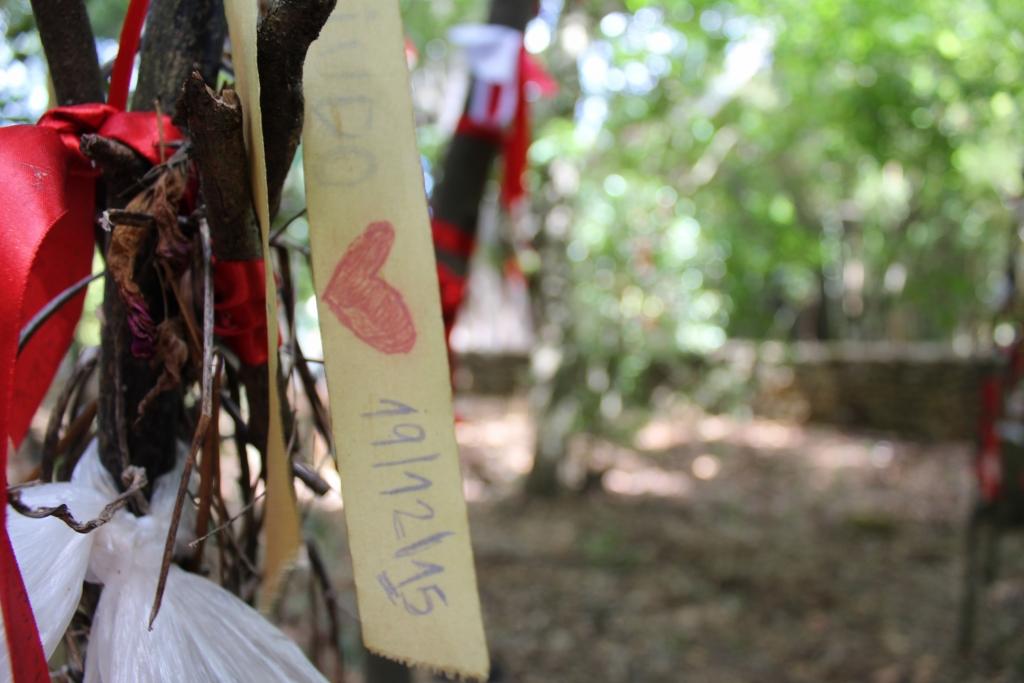 Quinta das lágrimas - andreiamoitablog